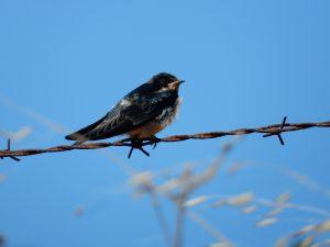 bird-on-wire