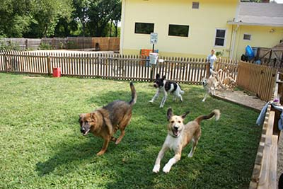 Image of dogs running in yard
